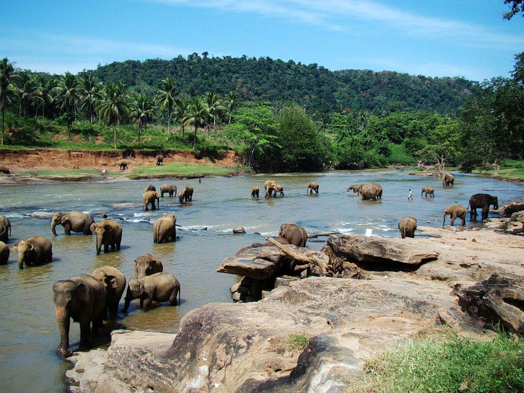 Государственный слоновый питомник