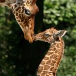 Зоопарк в Европе