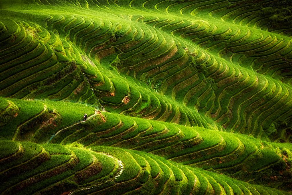 Рисовые террасы Пинь Ан