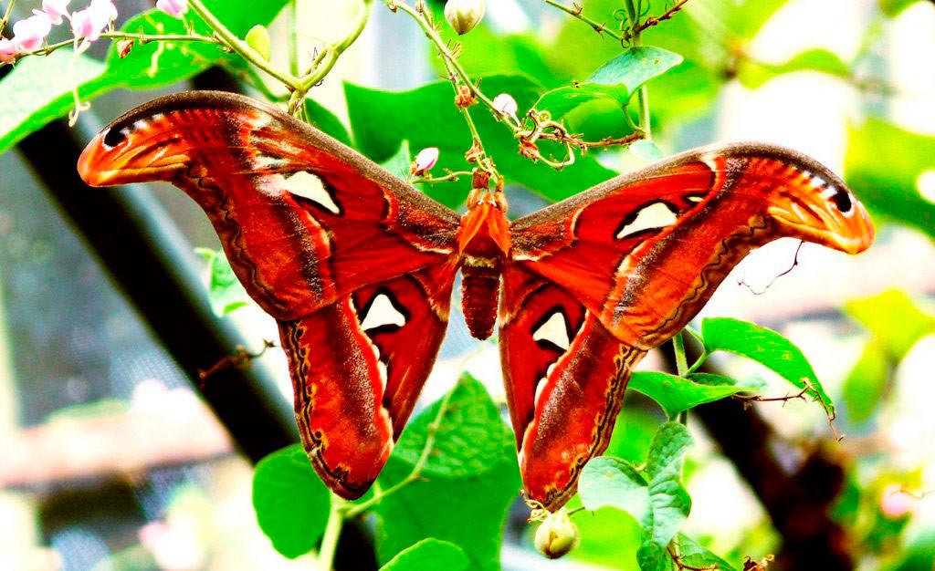 Парк бабочек в Нонг Нуч