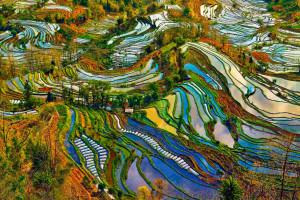 Рисовые террасы Хунхэ-Хани в Китае