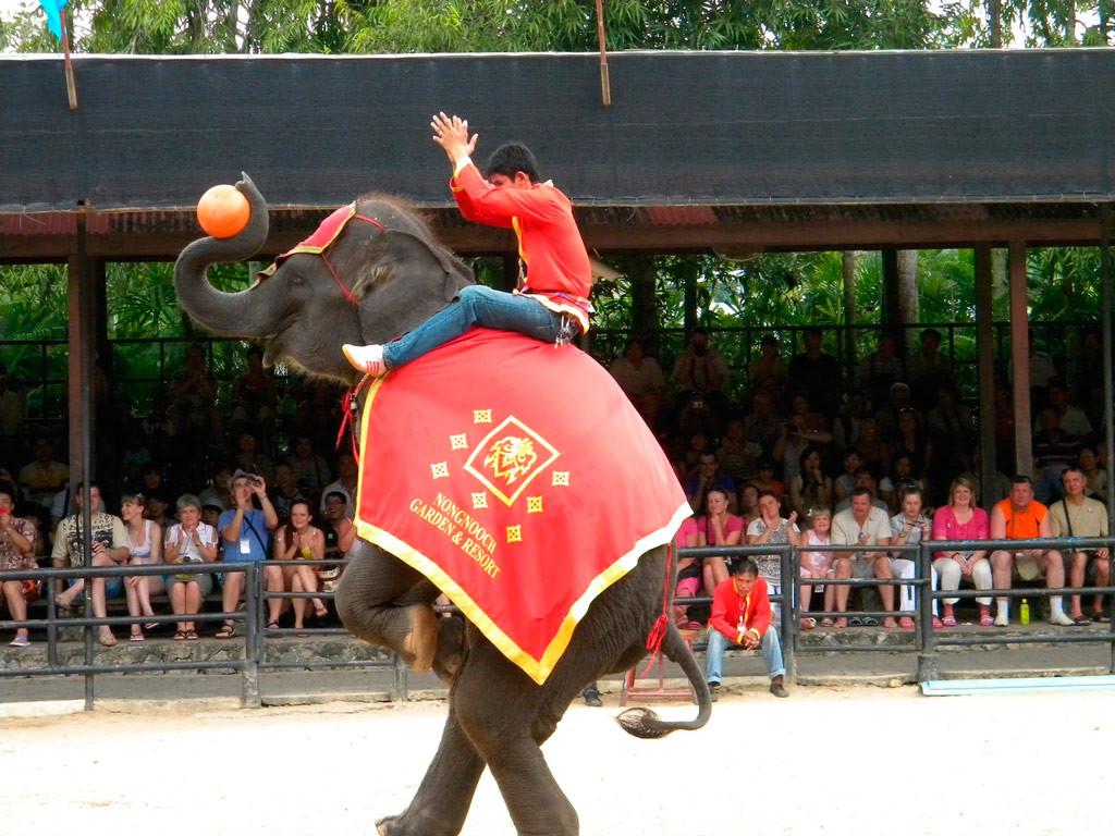 Шоу слонов в Нонг Нуч