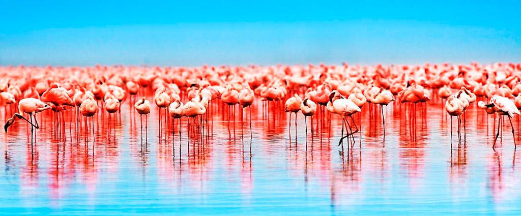 Озеро Накуру, Кения