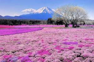 Восхождение на Фудзи: маршрут, советы, цены