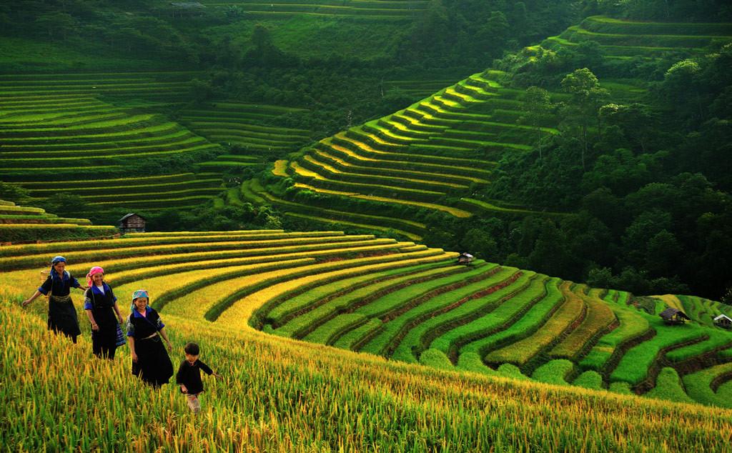 Рисовые террасы, Вьетнам