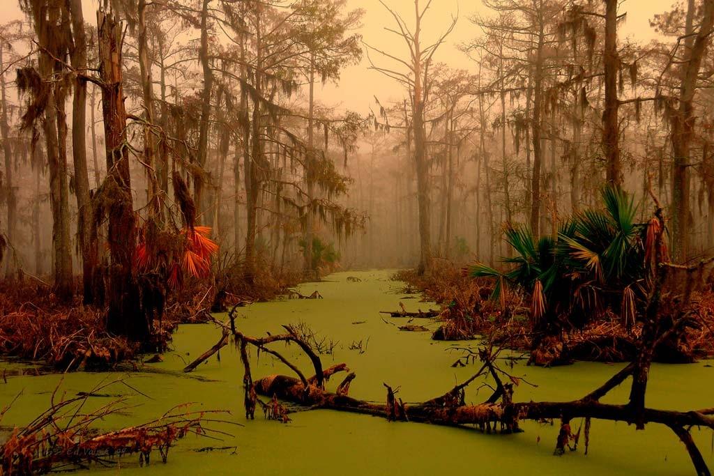 Болота Манчак, Луизиана