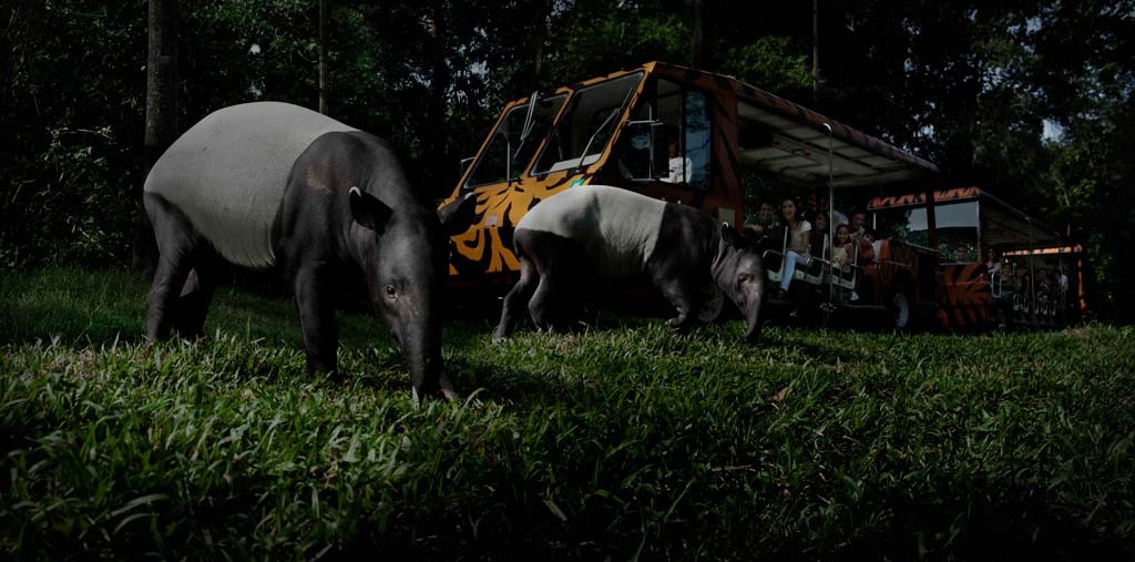 Ночная прогулка по сингапурскому зоопарку