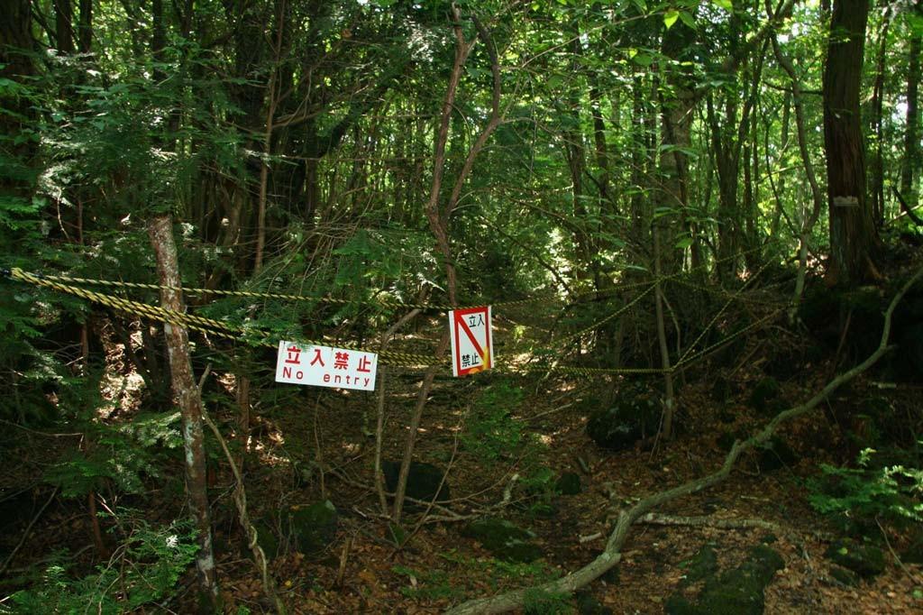 Лес организованных самоубийц в Японии