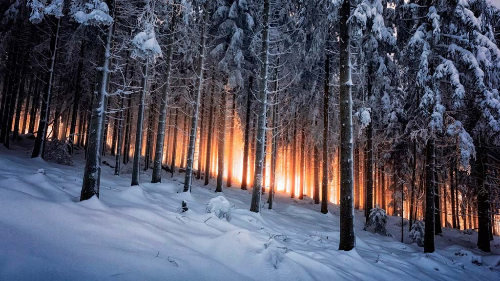 Черный лес, Германия