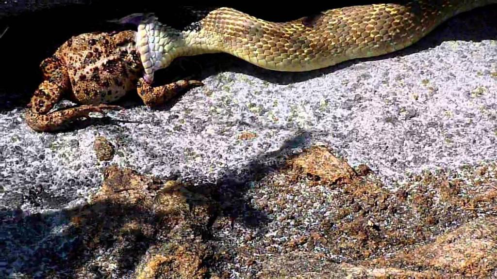 Обитель Змей