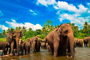 Как добраться до Шри-Ланки