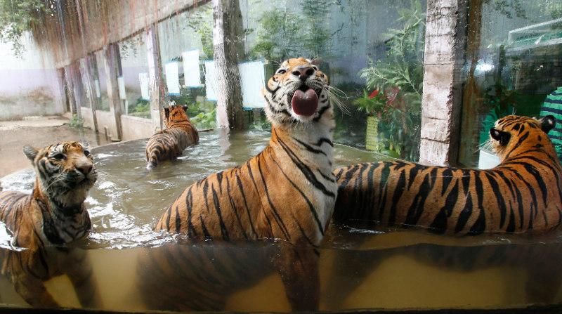 Парк крокодилов и тигров