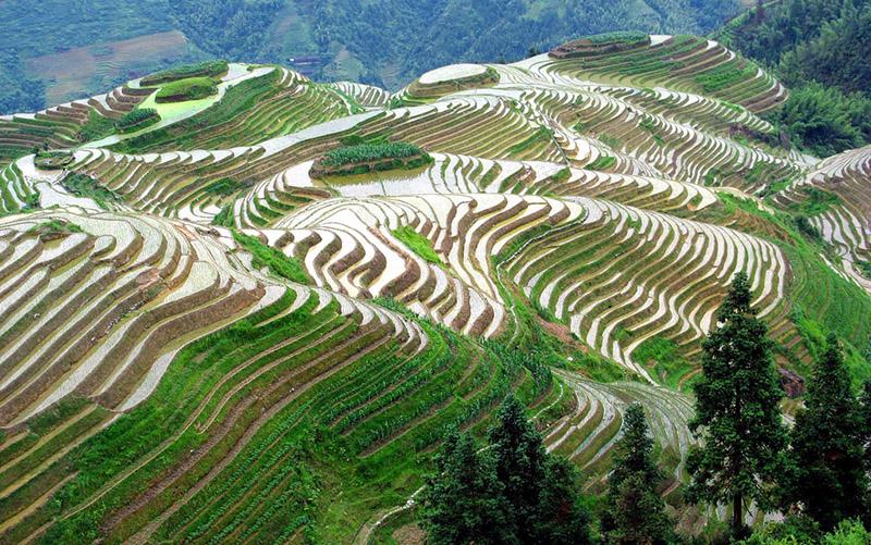 Покупаем тур на рисовые террасы