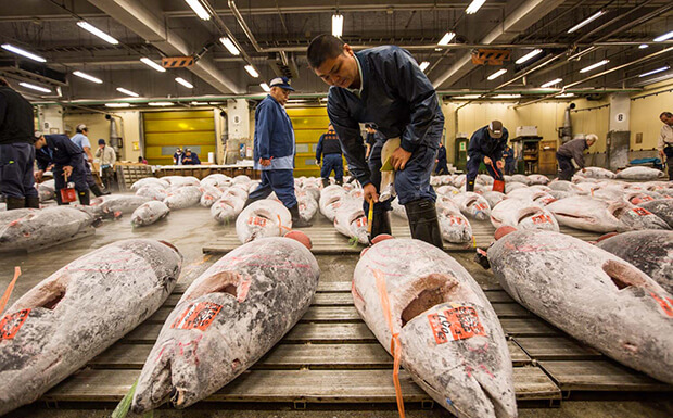 Рыбный рынок Цукидзи (Tsukiji)