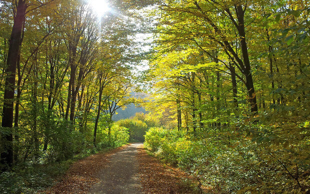 Венский лес – место паломничества