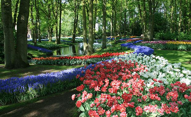 Кекенхоф – парк тюльпанов