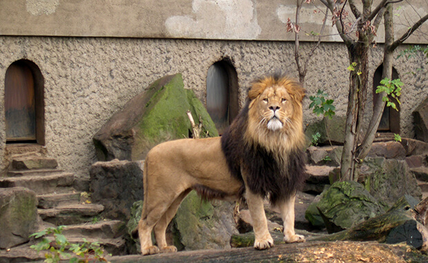 Зоопарк в Амстердаме