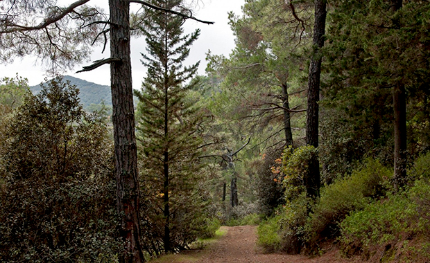 Лесной парк Каво Греко (Forest Park Cavo Greco)