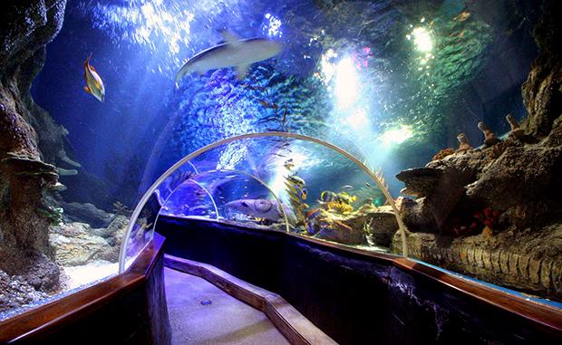 Морской центр Sea life