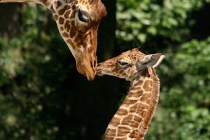Путешествие по зоопаркам Европы. Полезные советы в дорогу