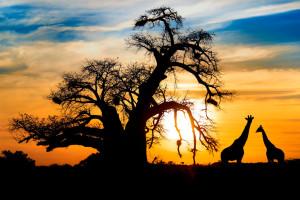 Самостоятельное в Уганду: путеводитель на 12 дней