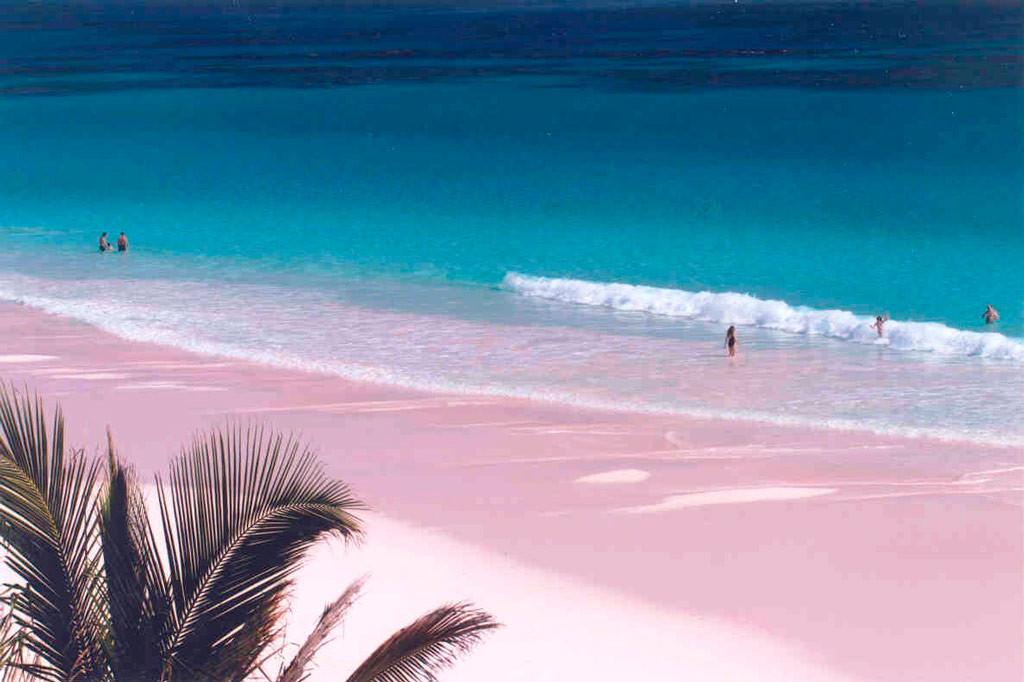 предоставляемые услуги фото багамы розовый пляж учащиеся дети