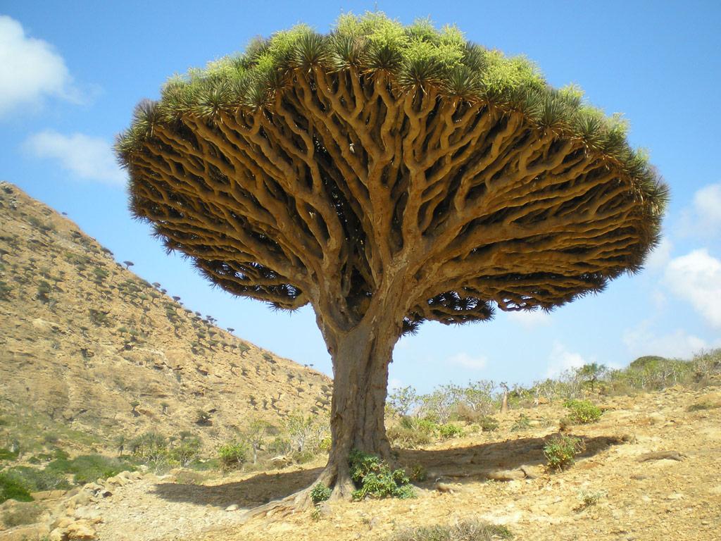 необычные деревья фото и описание заказ
