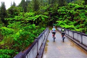 Мост в никуда в Новой Зеландии