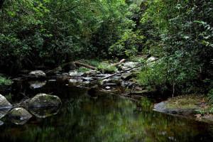 Дождевой лес Синхараджа на Шри-Ланке