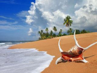 Доминикана или Шри-Ланка