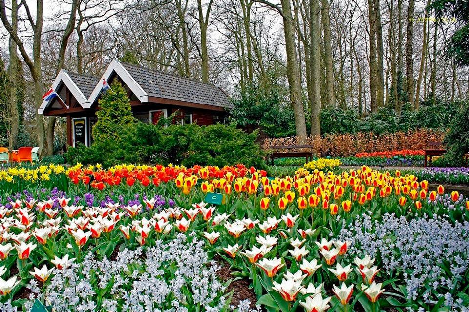 Кекенхоф, Нидерланды