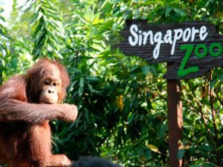 Сингапурский зоопарк – уникальный тропический заповедник