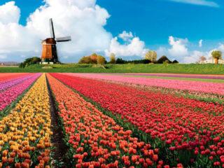 Куда съездить из Амстердама на 1 день – 14 самых интересных мест