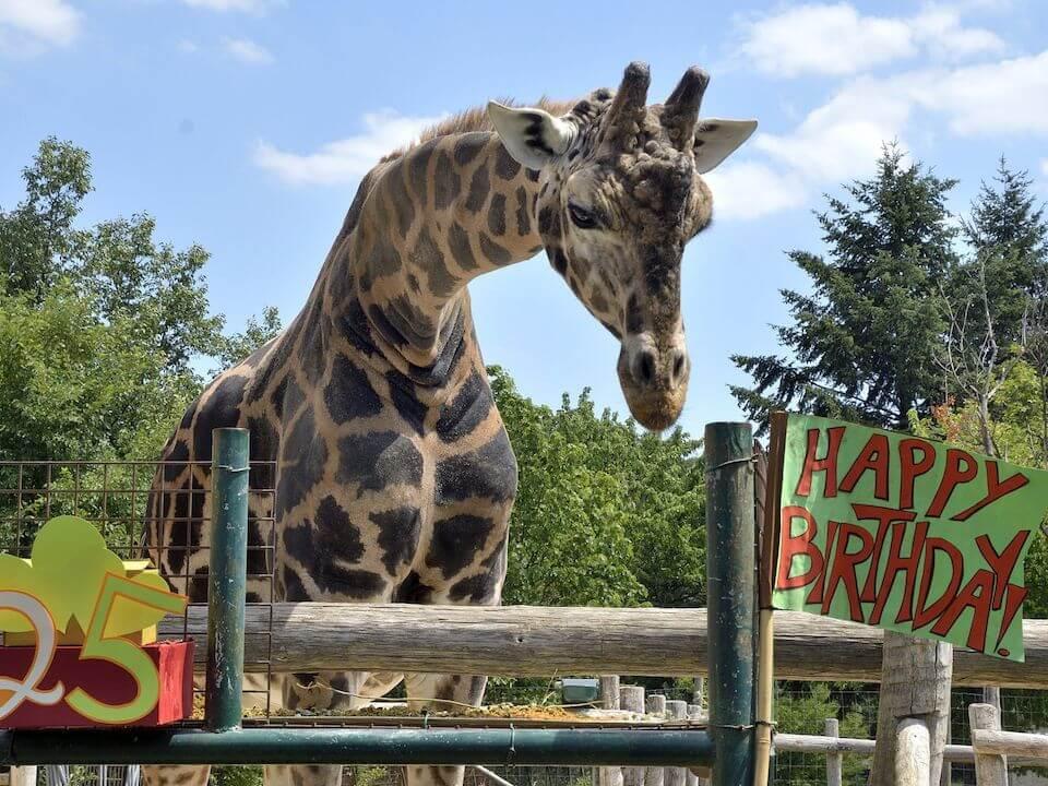 Где находится самый старый зоопарк в мире?