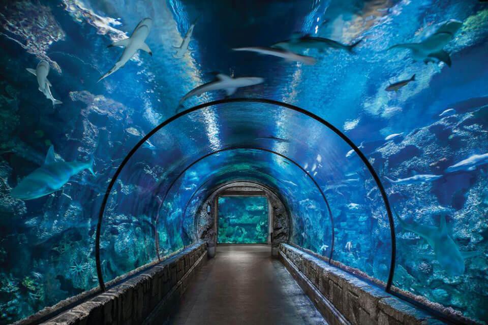 Океанариум «Акулий риф, Лас-Вегас