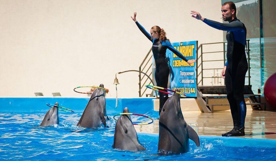 Дельфинарий «Немо», Анапа